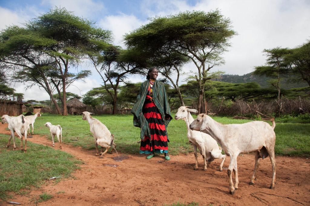 A pastoralist herds goats in Borana Ethiopia. Photo: Z Sewunet (ILRI)